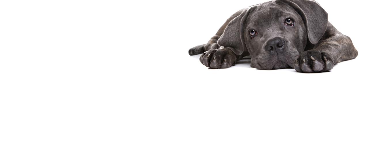 slider_3_perro